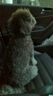 Bambino_in_car