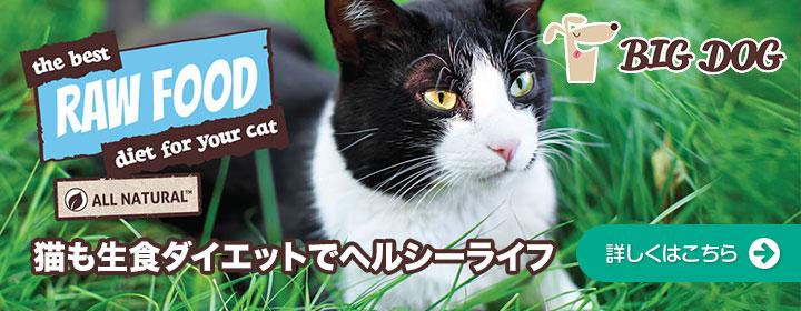 猫も生食ダイエットでヘルシーライフ
